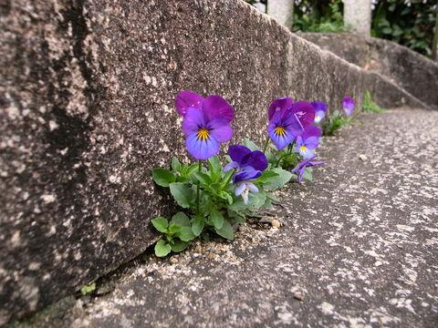 f:id:gzutetsu:20100321104206j:image