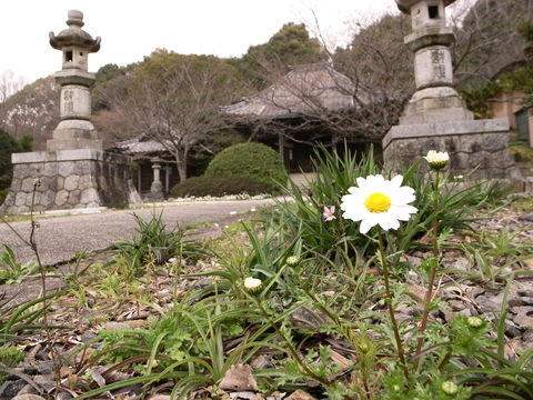 f:id:gzutetsu:20100321104335j:image