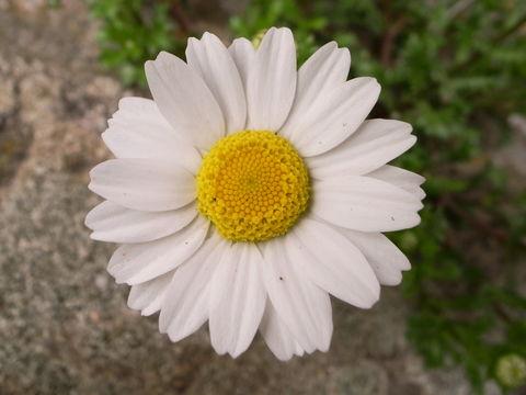 f:id:gzutetsu:20100321104507j:image