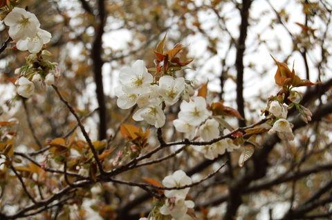 f:id:gzutetsu:20100321111713j:image