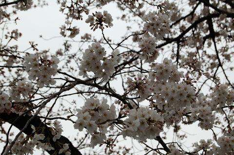 f:id:gzutetsu:20100328124500j:image