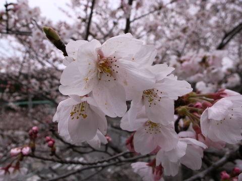 f:id:gzutetsu:20100328133841j:image