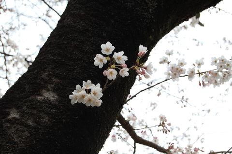 f:id:gzutetsu:20100328141159j:image