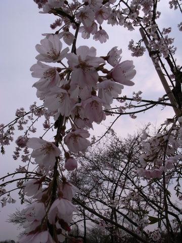 f:id:gzutetsu:20100328141732j:image