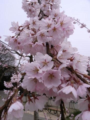 f:id:gzutetsu:20100328142037j:image