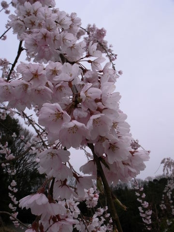 f:id:gzutetsu:20100328142049j:image