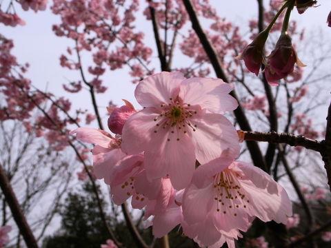 f:id:gzutetsu:20100328142518j:image