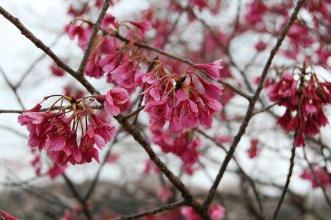 f:id:gzutetsu:20100328143248j:image