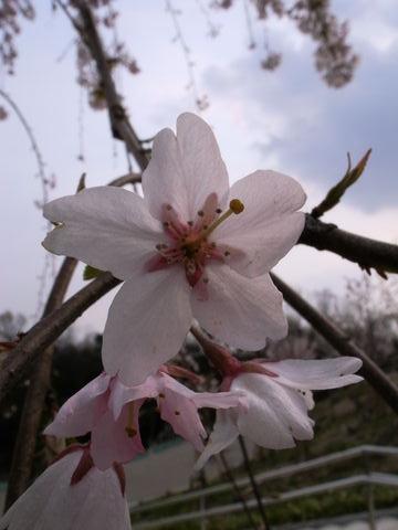 f:id:gzutetsu:20100328143339j:image