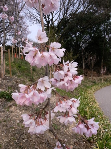 f:id:gzutetsu:20100328143413j:image