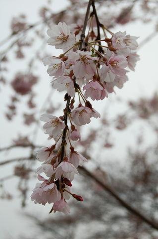 f:id:gzutetsu:20100328143440j:image