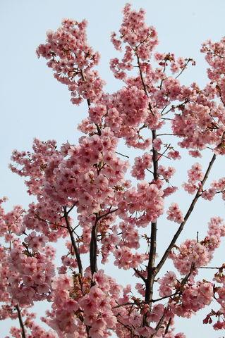 f:id:gzutetsu:20100328144141j:image