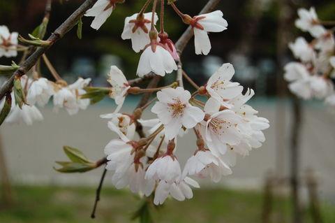 f:id:gzutetsu:20100328144502j:image