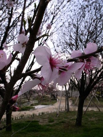 f:id:gzutetsu:20100328151019j:image