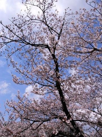 f:id:gzutetsu:20100403125723j:image