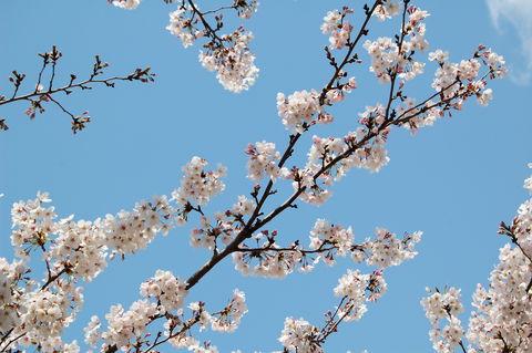 f:id:gzutetsu:20100403131241j:image