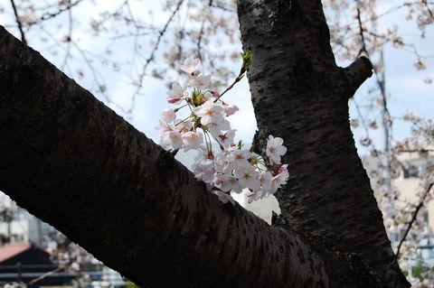f:id:gzutetsu:20100403132114j:image