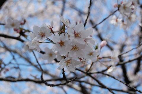 f:id:gzutetsu:20100403132123j:image