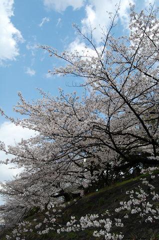 f:id:gzutetsu:20100403134832j:image