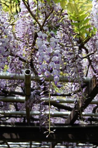 f:id:gzutetsu:20100429135610j:image