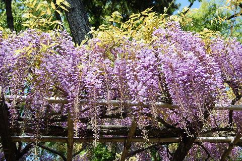 f:id:gzutetsu:20100429140624j:image