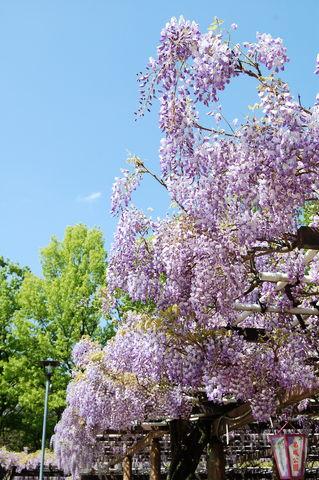 f:id:gzutetsu:20100429141050j:image