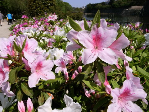 f:id:gzutetsu:20100429141147j:image