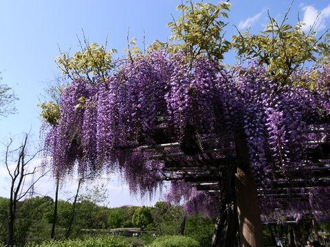 f:id:gzutetsu:20100429143119j:image