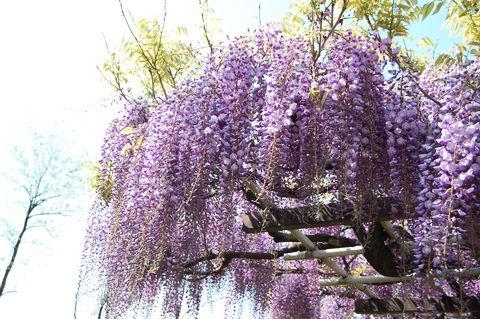 f:id:gzutetsu:20100429144830j:image