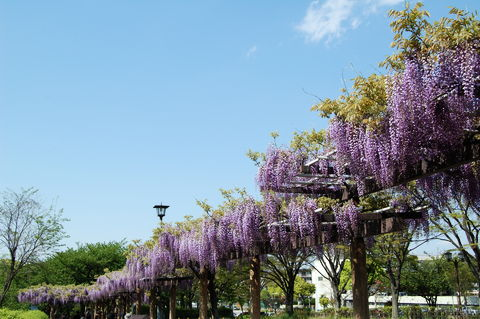 f:id:gzutetsu:20100429145129j:image