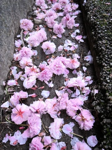 f:id:gzutetsu:20100429164032j:image