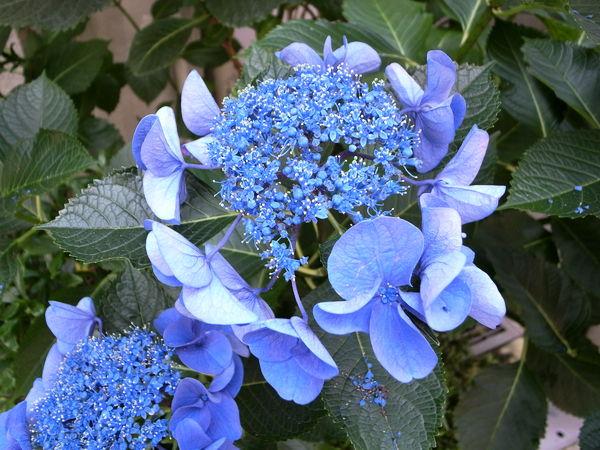 f:id:gzutetsu:20100628120951j:image