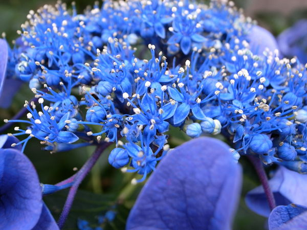 f:id:gzutetsu:20100628121031j:image