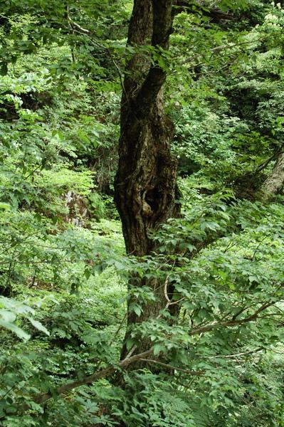 f:id:gzutetsu:20100811123451j:image