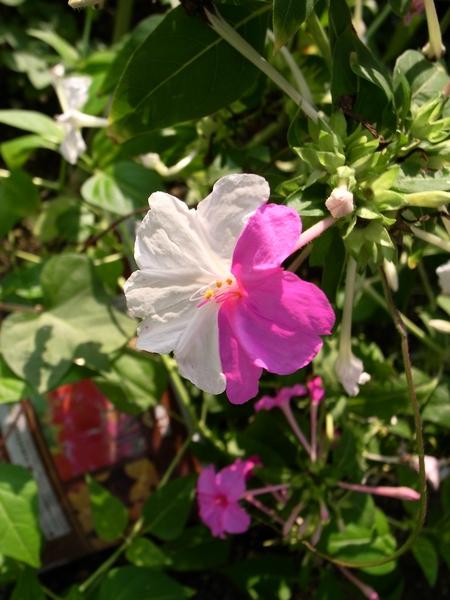 f:id:gzutetsu:20101005074119j:image