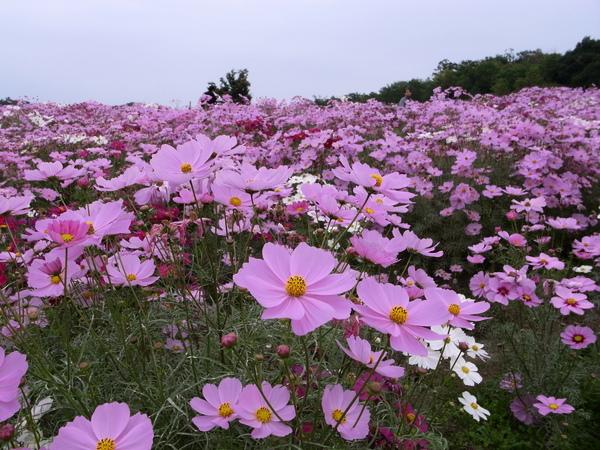 f:id:gzutetsu:20101024121203j:image