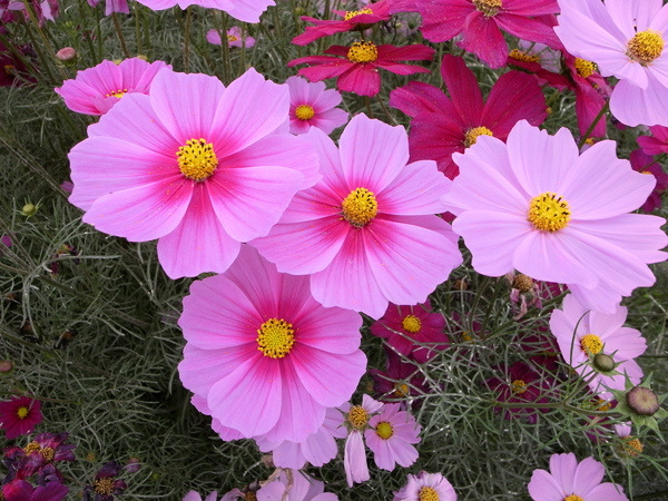 f:id:gzutetsu:20101024121414j:image