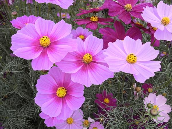 f:id:gzutetsu:20101024122002j:image