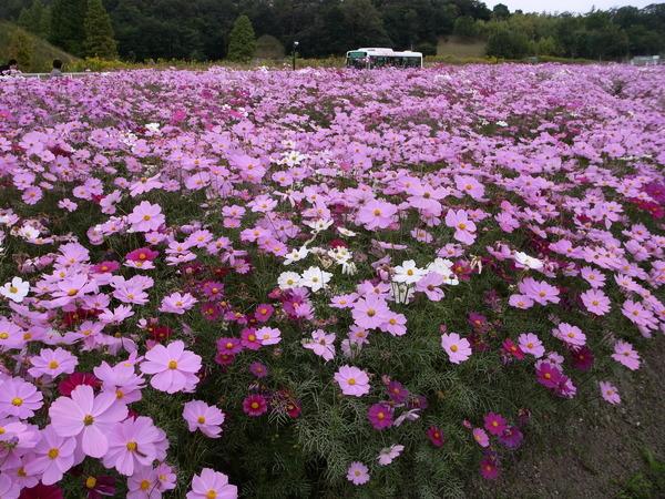f:id:gzutetsu:20101024122033j:image
