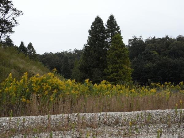 f:id:gzutetsu:20101024123310j:image