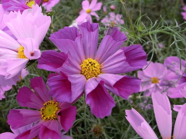 f:id:gzutetsu:20101024131824j:image
