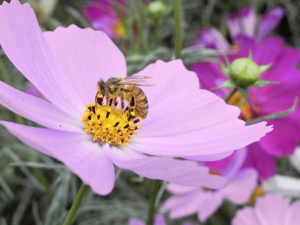 f:id:gzutetsu:20101024132649j:image