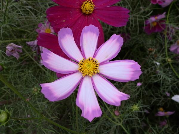 f:id:gzutetsu:20101024132828j:image