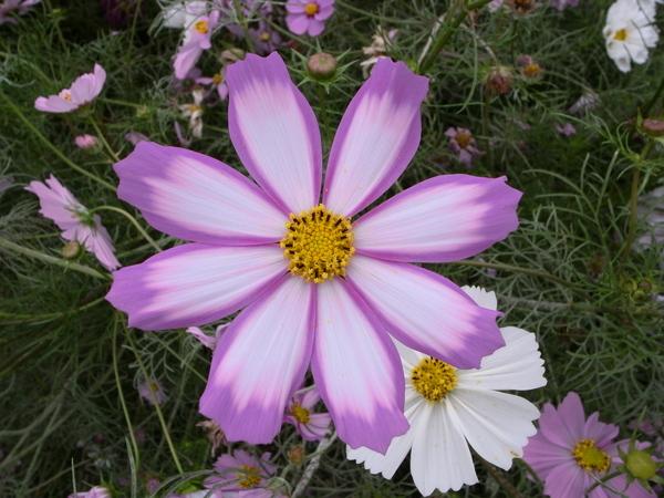 f:id:gzutetsu:20101024132850j:image