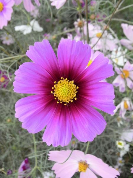 f:id:gzutetsu:20101024133552j:image