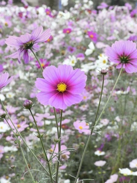 f:id:gzutetsu:20101024133947j:image
