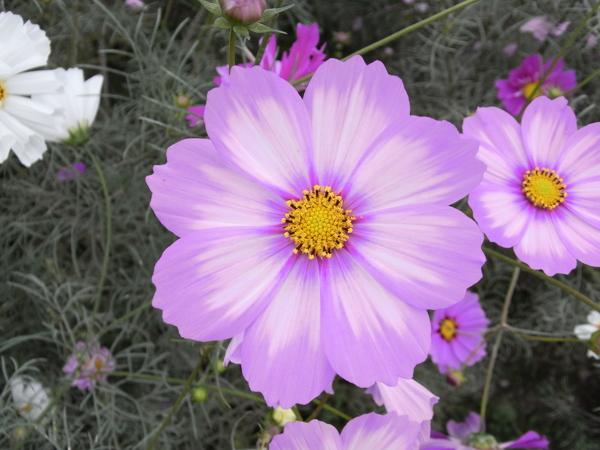 f:id:gzutetsu:20101024134530j:image
