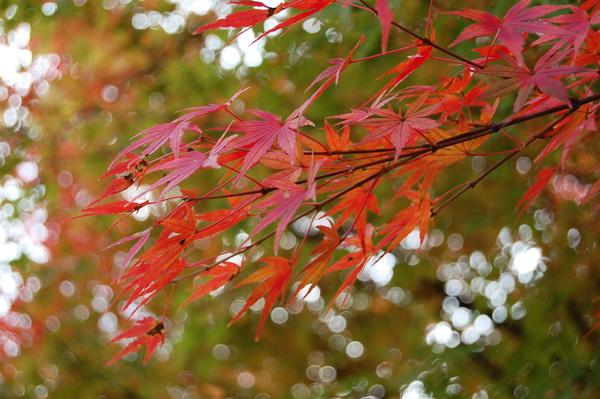 f:id:gzutetsu:20101128123449j:image
