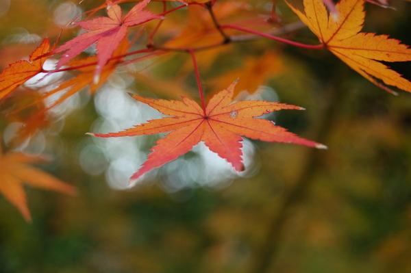 f:id:gzutetsu:20101128123741j:image