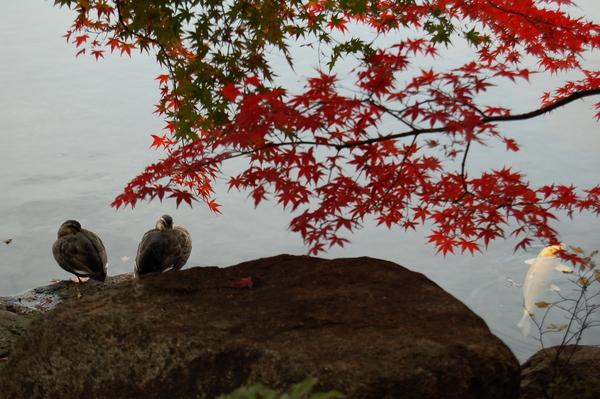 f:id:gzutetsu:20101128125920j:image